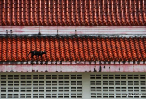 Шла по крыше кошка