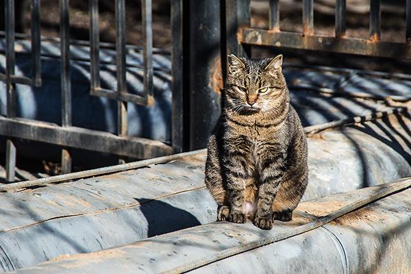 Весна и… кошки