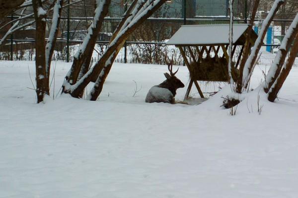 Зима в Нескучном саду.