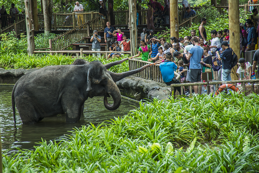 Веселое слонокормление