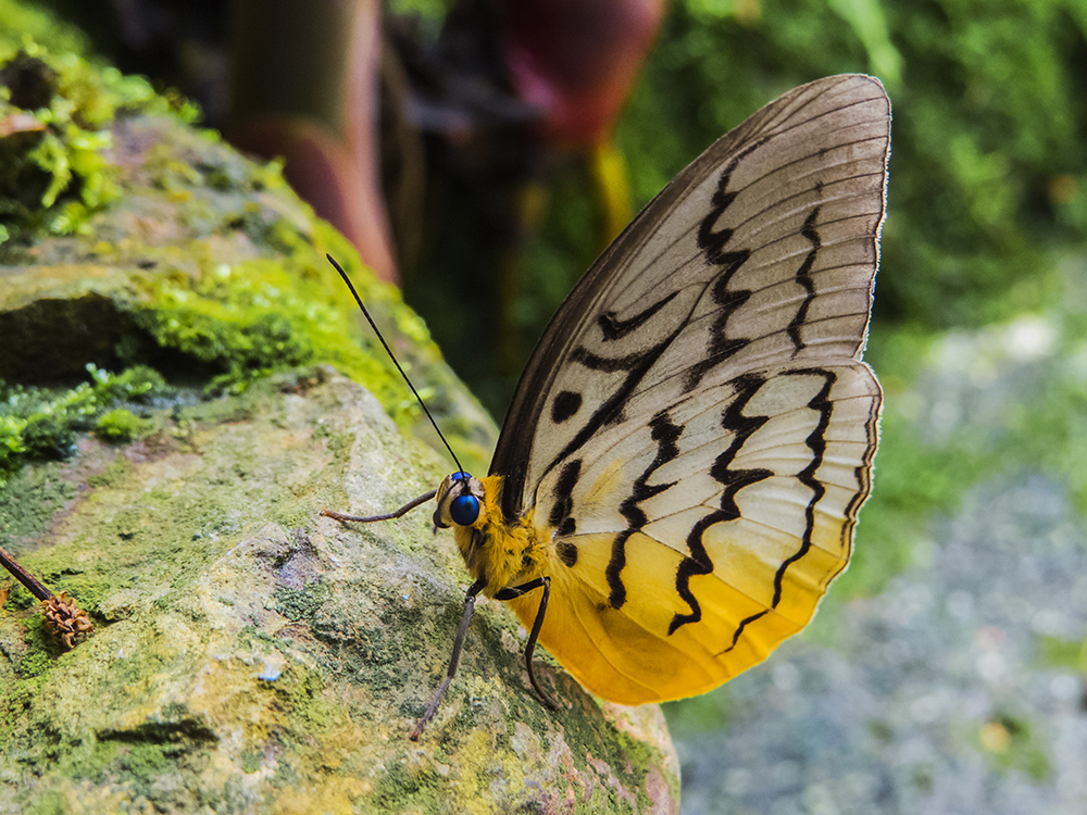 Ферма бабочек (Butterfly farm Penang)