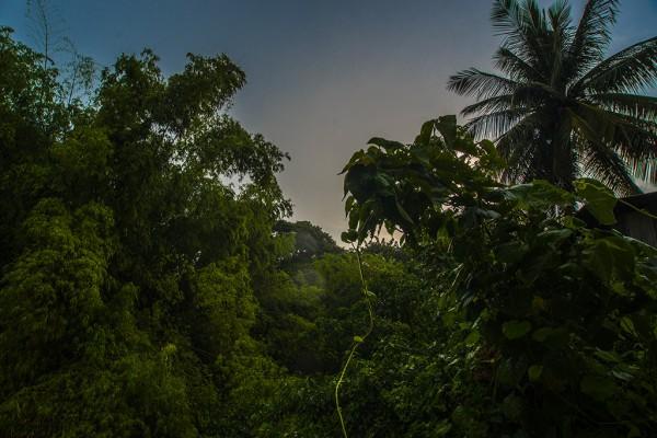 Мокрый рассвет в джунглях.