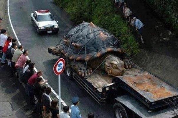 Крупнейшая в мире черепаха найдена в реке Амазонке .